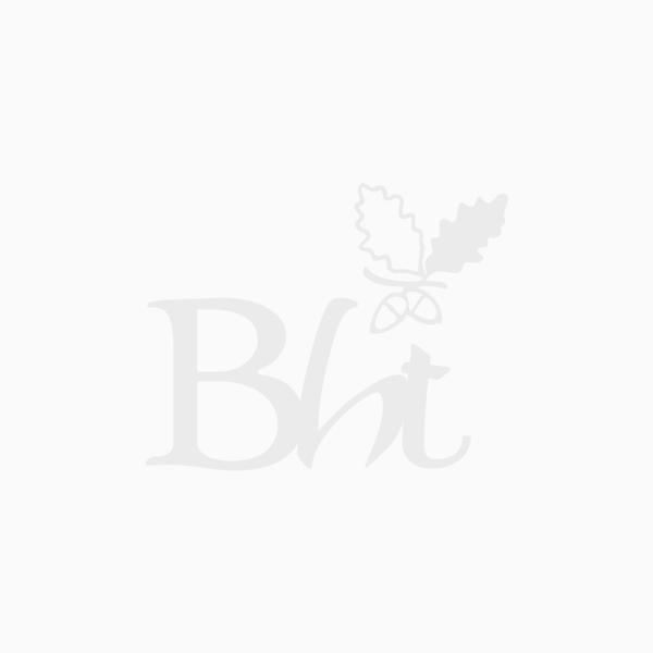 Sorbus aria - Whitebeam