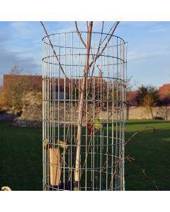 Galvanised Weld Mesh Tree Guard