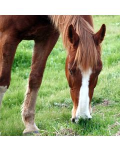 Horse Friendly Hedge Pack