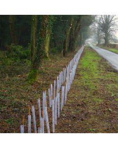 Hawthorn Hedge Pack